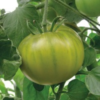 Production conventionnelle - TOMATE RONDE de couleur/originale - PROSEM