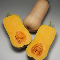 Graines potagères COURGE BUTTERNUT TEDDY F1 - PROSEM
