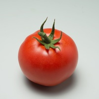 Graines potagères TOMATE DETERMINEE de plein champ PS TO 426 F1 - PROSEM