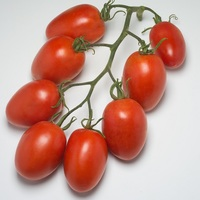 Graines potagères TOMATE ALLONGEE ATYLIADE F1 - PROSEM